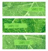 Yaprak afiş — Stok Vektör