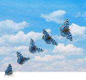 Butterfly takeoff — Stock Photo