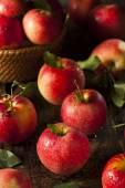 Raw Organic Red Gala Apples — Stock Photo