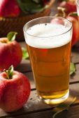 Hard Apple Cider Ale — Stock Photo