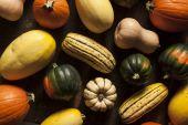 Organic Assorted Autumn Squash — Stock Photo
