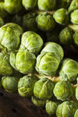 Raw Green Organic Brussel Sprouts — Stockfoto