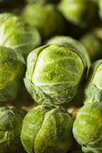 Raw Green Organic Brussel Sprouts — Foto Stock
