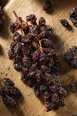 Organic Dry Raisins on the Vine — Foto Stock