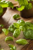 Raw Organic Green Basil — Stock Photo