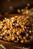 Raw Organic Multi Colored Calico Popcorn — Stock Photo