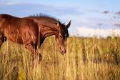 Cavalo — Foto Stock