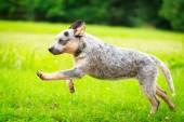 动物 — 图库照片
