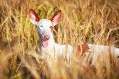 Animale — Foto Stock