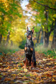 Animal Dog — Stock Photo