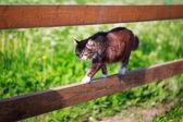 Animal — Foto Stock
