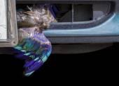 Dead bird stuck in front of car. — Fotografia Stock