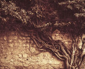 Old ivy growing on the ancient brick wall, retro tinted — Stock Photo