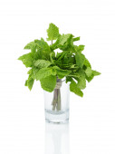 Bunch of fresh mint in shot glass — Stock Photo