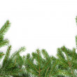 Bottom border from fir twigs — Stock Photo #54617539