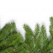 Bottom border from fir twigs — Stock Photo #54617543