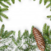 Square composition with fir twigs and cone — Stok fotoğraf