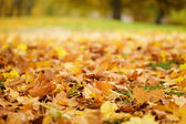 Bright autumn leaves on the ground — Stock Photo