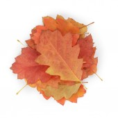 Red oak autumn leaves — Foto Stock