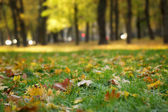 Cold autumn morning in town — Stock Photo
