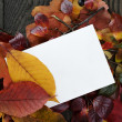 Autumn leaves on old oak table with paper card — Stock Photo #55746379