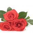 Three fresh red roses isolated on white — Stock Photo #63043883