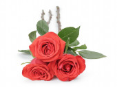 Three fresh red roses isolated on white — Stock Photo