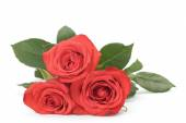 Three fresh red roses isolated on white — Foto Stock