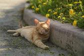 Red homeless cat resting on sidewalk — ストック写真