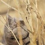 Grey cat sniffs grass outdoors — Stock Photo #69989887