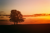 Two oak trees silhouette in sunset on field — Stock Photo