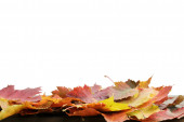 Autumn leaves for border composition — Stock Photo