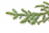 Green fir branch isolated on white — Stock Photo