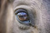 Horses eye — Stock Photo