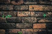 Ancient brick wall with little plants — Stock Photo