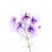 Inflorescence larkspur by watercolor — Stock Vector