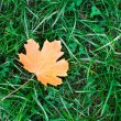 Autumn leaf on green grass — Stock Photo