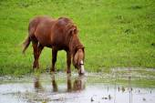 Home animals — Stock Photo