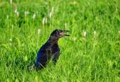 Birds Altaya — Stock Photo