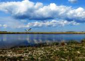 Nature Altaya — Foto de Stock