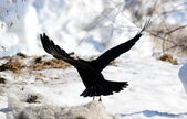 Birds of the steppes — Stock Photo