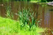 Příroda altaya — Stock fotografie