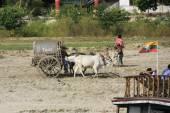 Ox cart on a shore of the river, Mingun, Mandalay region, Myanma — Stock Photo