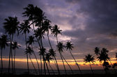 Silhouetted palm trees at sunset, Unawatuna, Sri Lanka — Zdjęcie stockowe