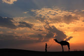 Silhouetted person with a camel at sunset, Thar desert near Jais — Stock Photo