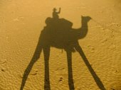 Shadow of a camel with tourist on a sand dunes, Thar desert, Ind — Stock Photo
