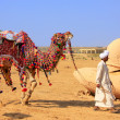 Local man walking with his camel at Desert Festival, Jaisalmer, — Stock Photo #56092635