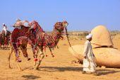 Local man walking with his camel at Desert Festival, Jaisalmer, — Stock Photo