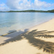Sandy beach with palm tree shadows, Nananu-i-Ra island, Fiji — Stock Photo #56119705