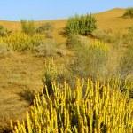 Thar desert near Jaisalmer, Rajasthan, India — Stock Photo #68531691